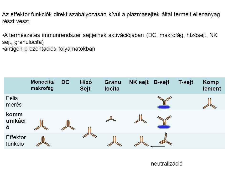 antigén prezentációs folyamatokban