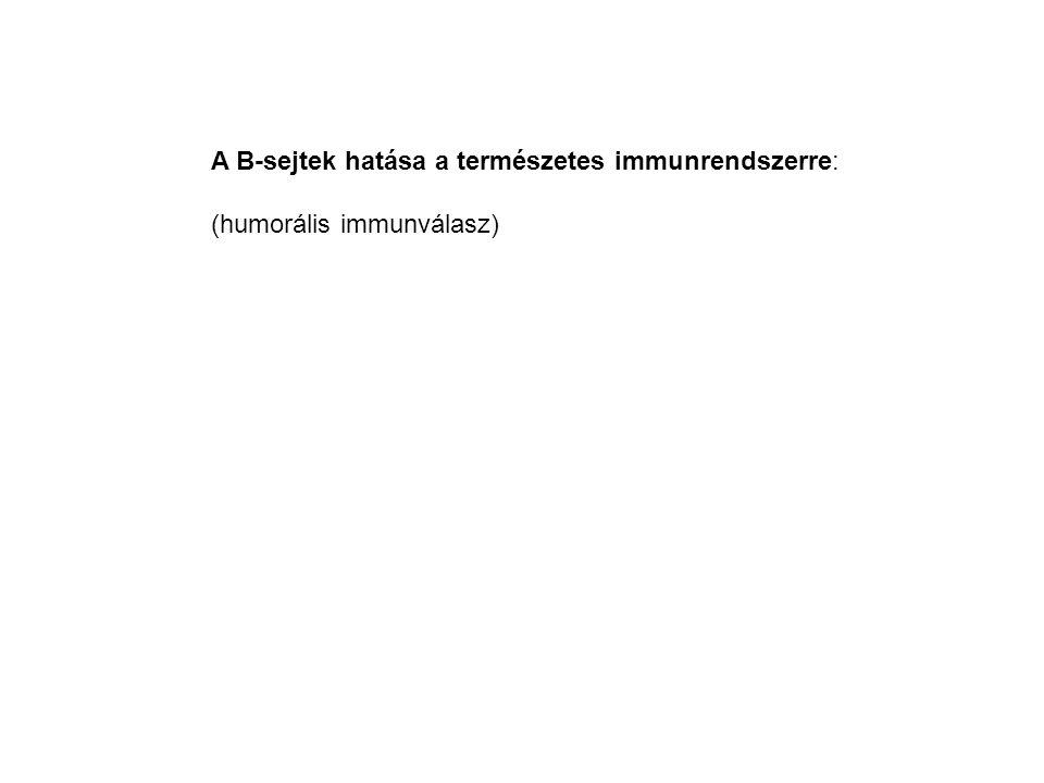 A B-sejtek hatása a természetes immunrendszerre:
