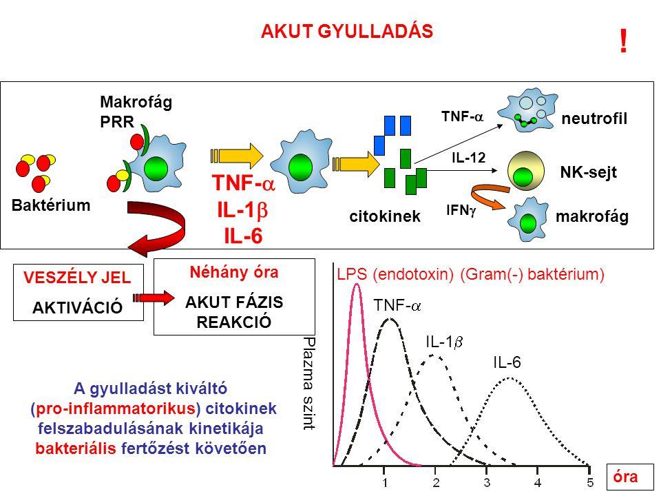 ! TNF- IL-1 IL-6 AKUT GYULLADÁS Makrofág PRR neutrofil NK-sejt