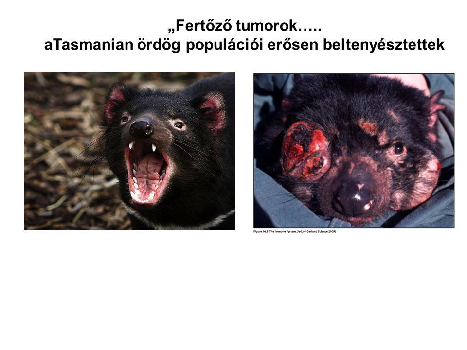 aTasmanian ördög populációi erősen beltenyésztettek