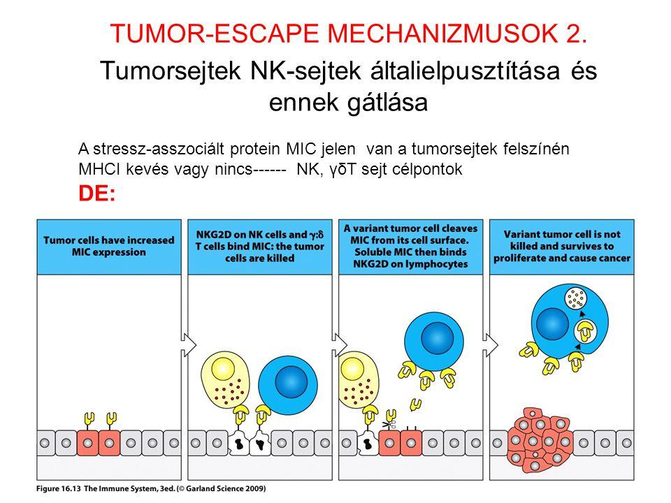 Tumorsejtek NK-sejtek általielpusztítása és ennek gátlása