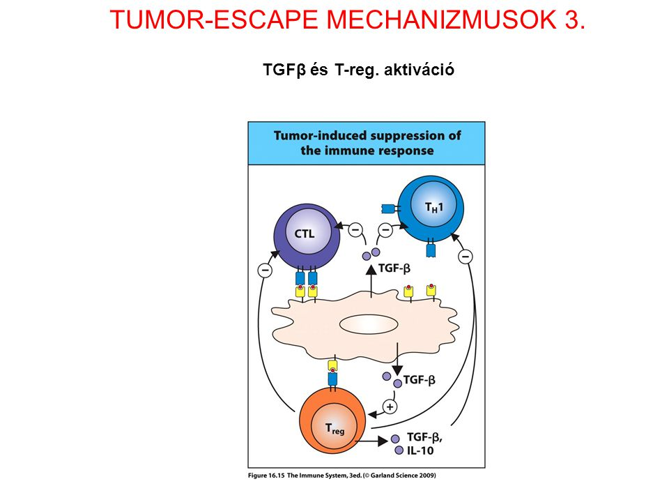 TUMOR-ESCAPE MECHANIZMUSOK 3.