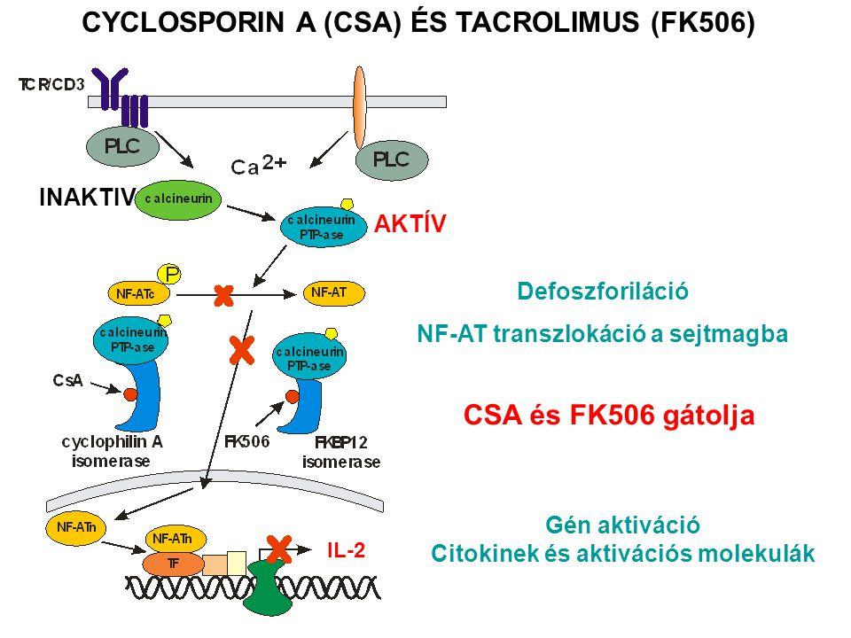 CYCLOSPORIN A (CSA) ÉS TACROLIMUS (FK506) CSA és FK506 gátolja