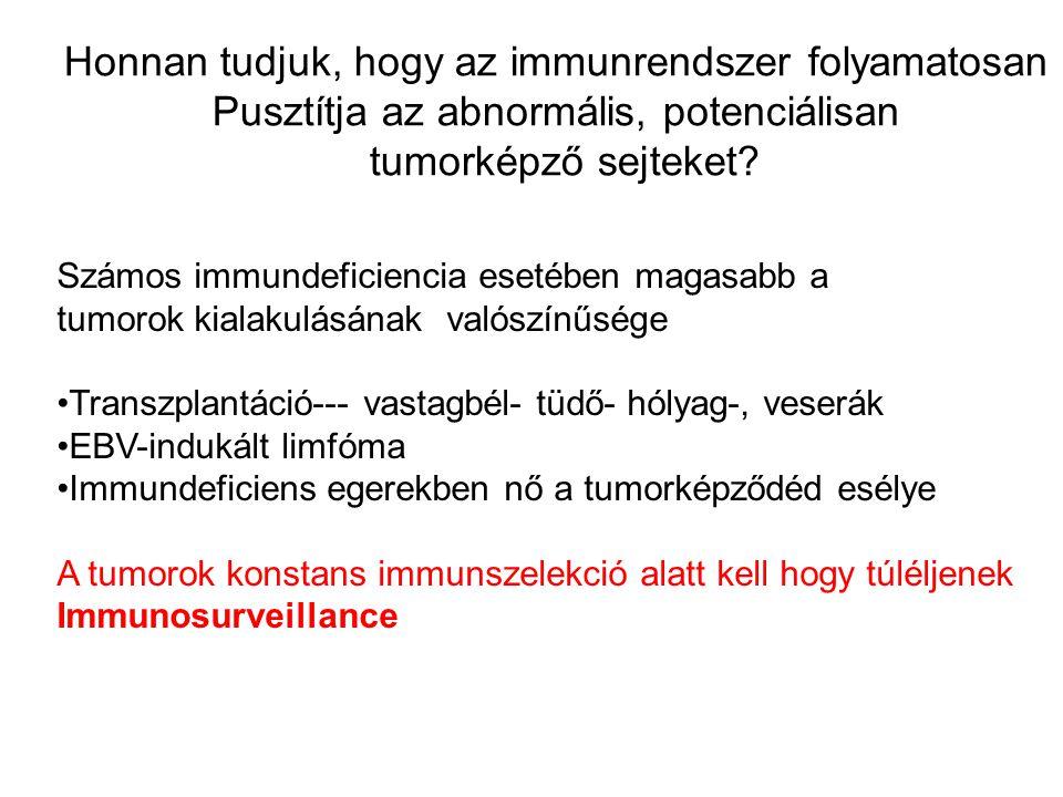 Honnan tudjuk, hogy az immunrendszer folyamatosan