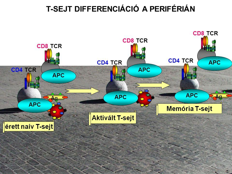 T-SEJT DIFFERENCIÁCIÓ A PERIFÉRIÁN