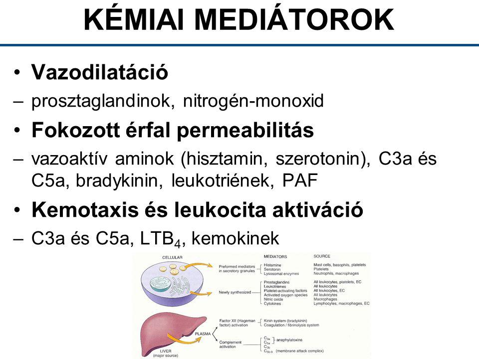 KÉMIAI MEDIÁTOROK Vazodilatáció Fokozott érfal permeabilitás