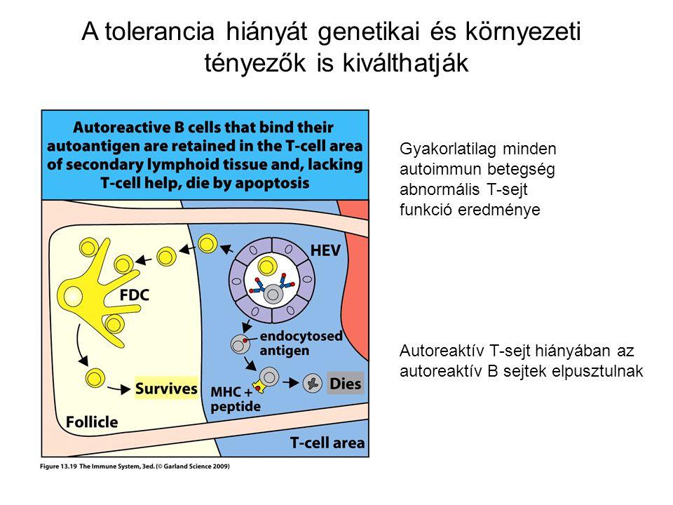 A tolerancia hiányát genetikai és környezeti tényezők is kiválthatják