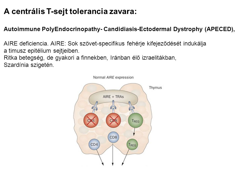 A centrális T-sejt tolerancia zavara: