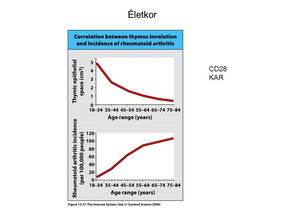 Életkor CD28 KAR