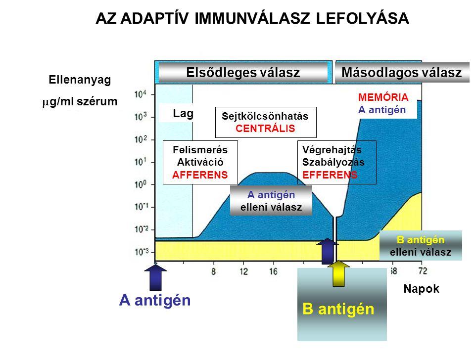 AZ ADAPTÍV IMMUNVÁLASZ LEFOLYÁSA A antigén elleni válasz
