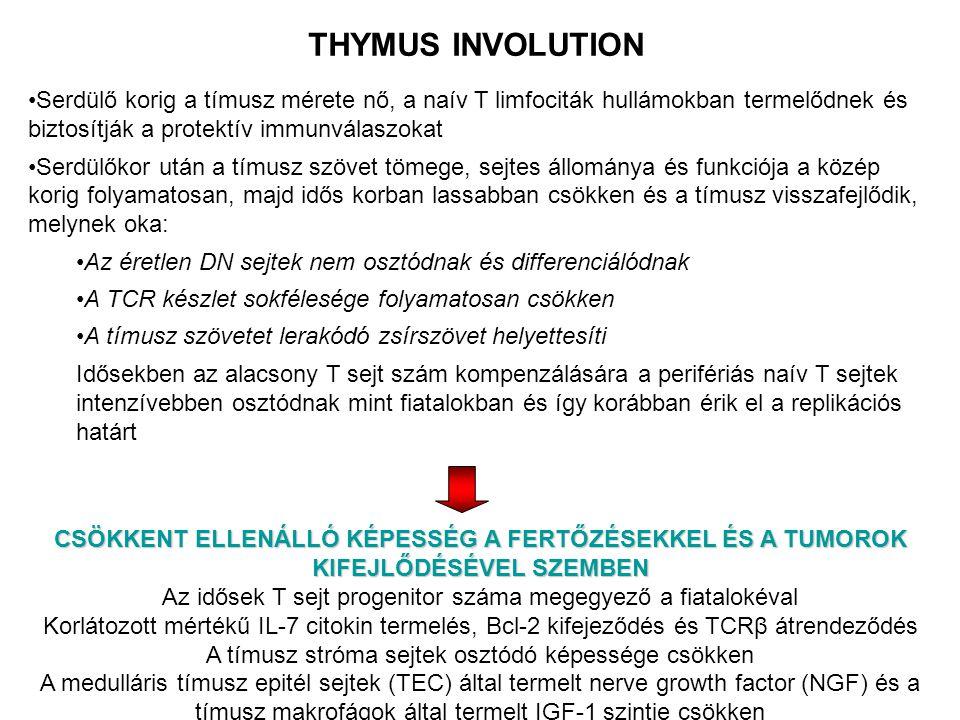 THYMUS INVOLUTION Serdülő korig a tímusz mérete nő, a naív T limfociták hullámokban termelődnek és biztosítják a protektív immunválaszokat.