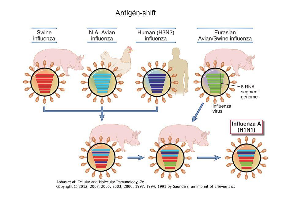 Antigén-shift Kötelező és ajánlott védőoltások