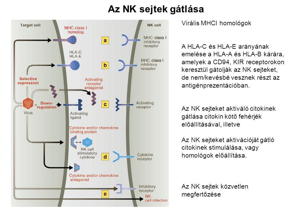 Az NK sejtek gátlása Virális MHCI homológok