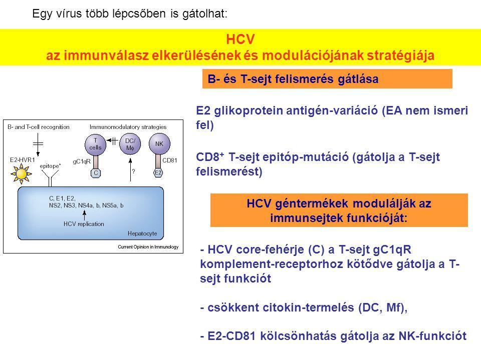HCV géntermékek modulálják az immunsejtek funkcióját: