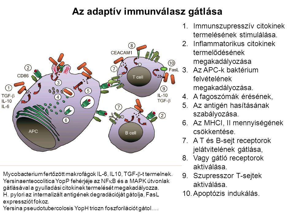 Az adaptív immunválasz gátlása