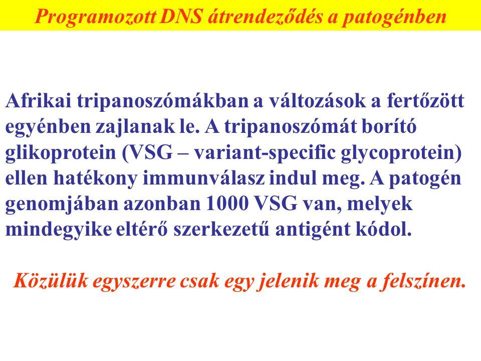 Programozott DNS átrendeződés a patogénben