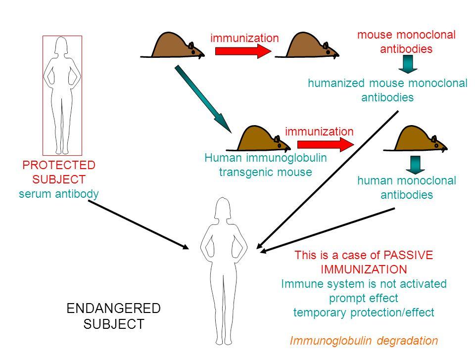 PASSZÍV IMMUNIZÁLÁS ENDANGERED SUBJECT mouse monoclonal antibodies