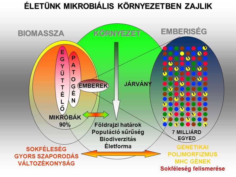 ÉLETÜNK MIKROBIÁLIS KÖRNYEZETBEN ZAJLIK BIOMASSZA KÖRNYEZET EMBERISÉG