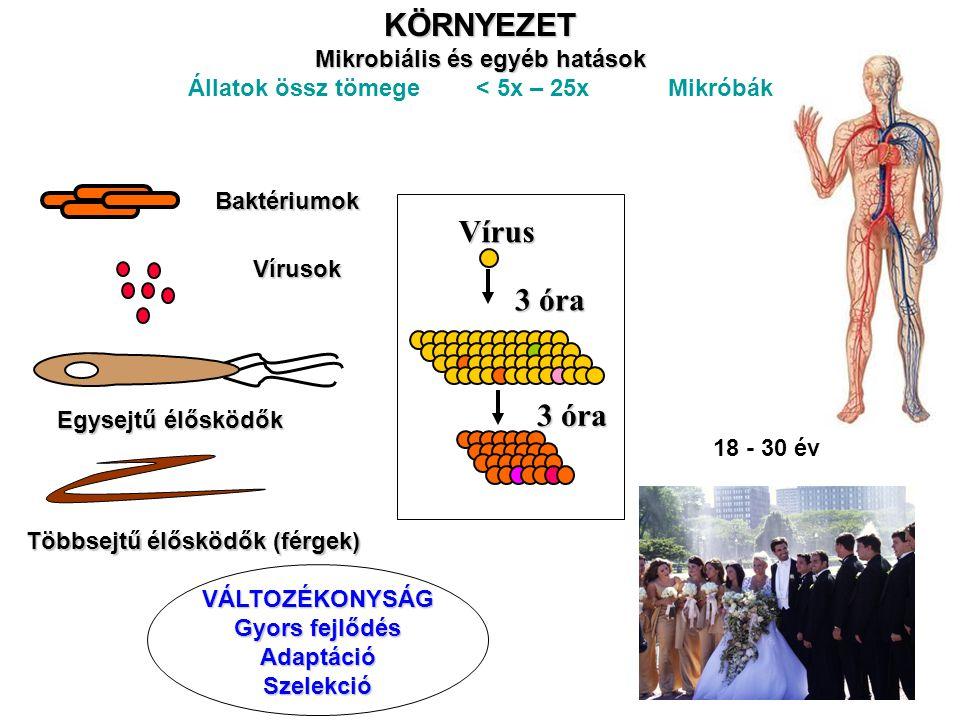 KÖRNYEZET Vírus 3 óra Mikrobiális és egyéb hatások