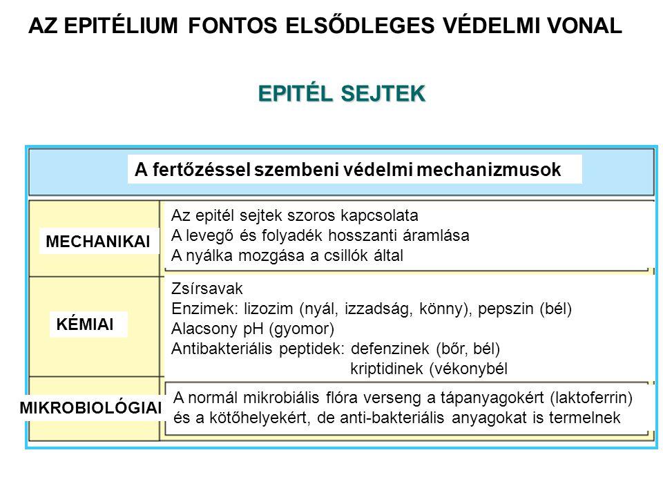 AZ EPITÉLIUM FONTOS ELSŐDLEGES VÉDELMI VONAL