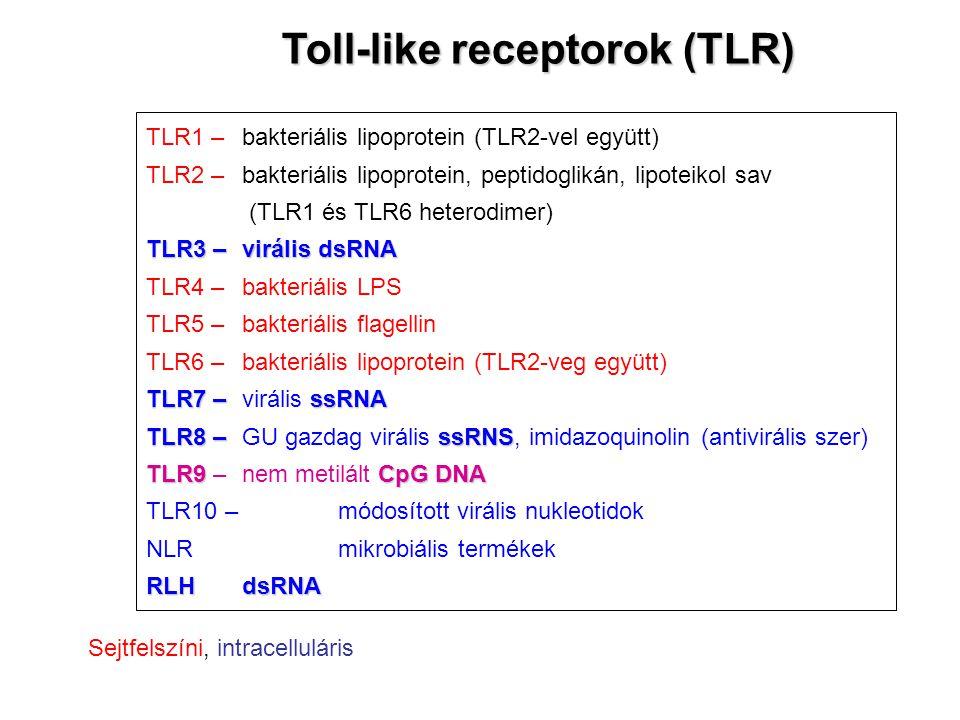 Toll-like receptorok (TLR)