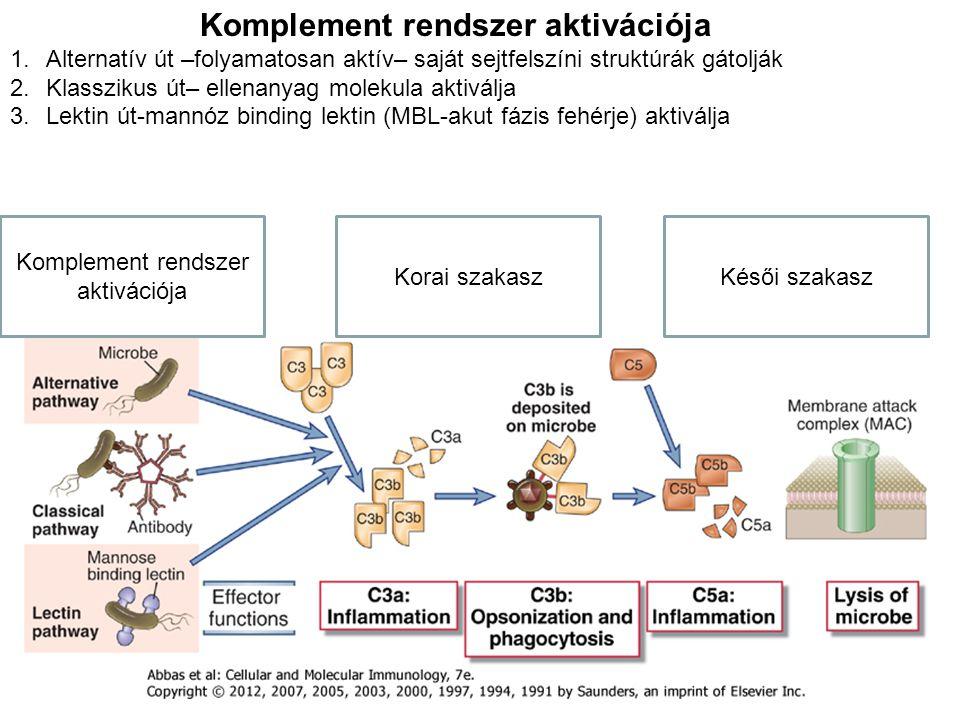 Komplement rendszer aktivációja
