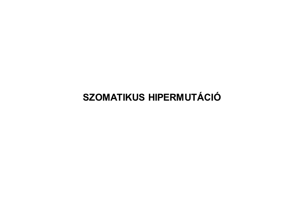 SZOMATIKUS HIPERMUTÁCIÓ