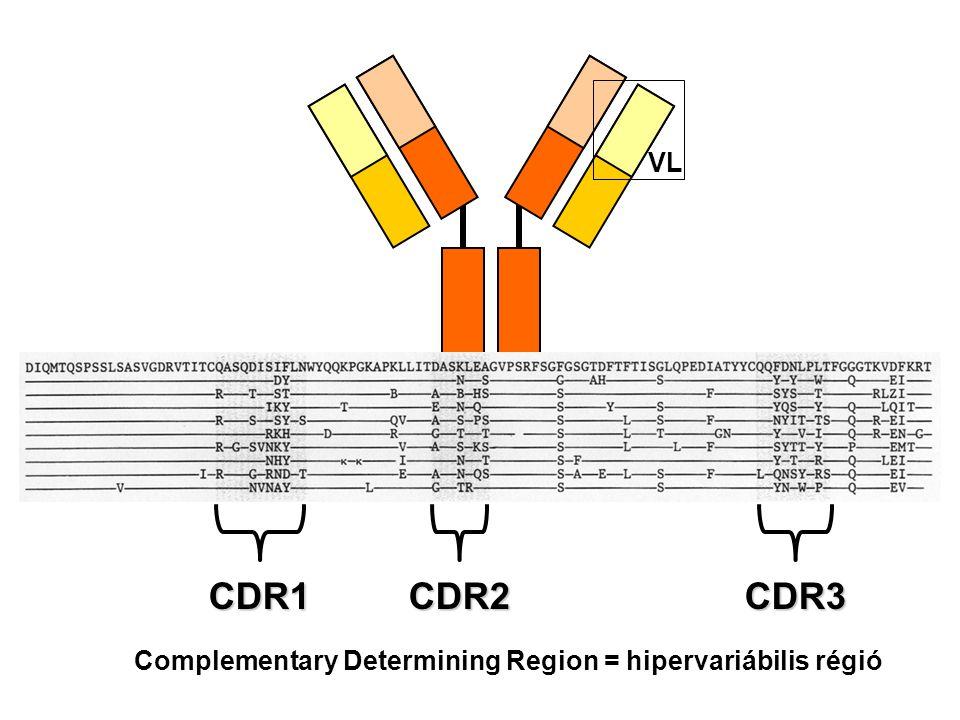 VL CDR1 CDR2 CDR3 Complementary Determining Region = hipervariábilis régió