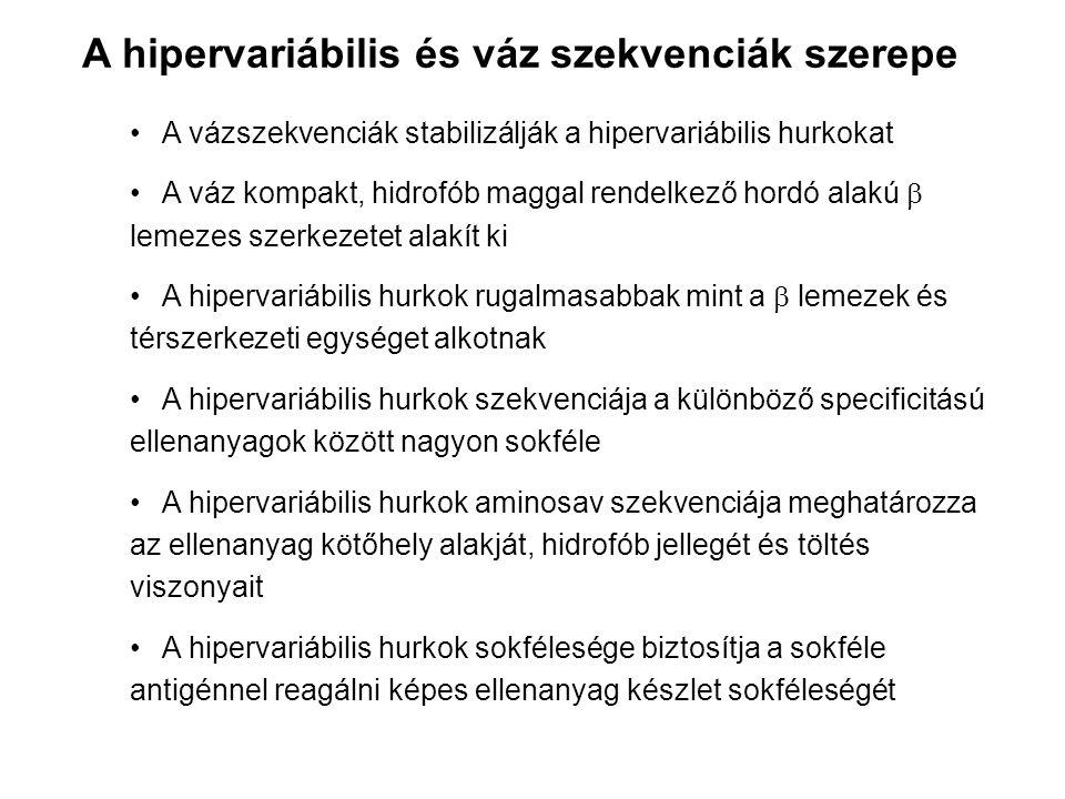 A hipervariábilis és váz szekvenciák szerepe