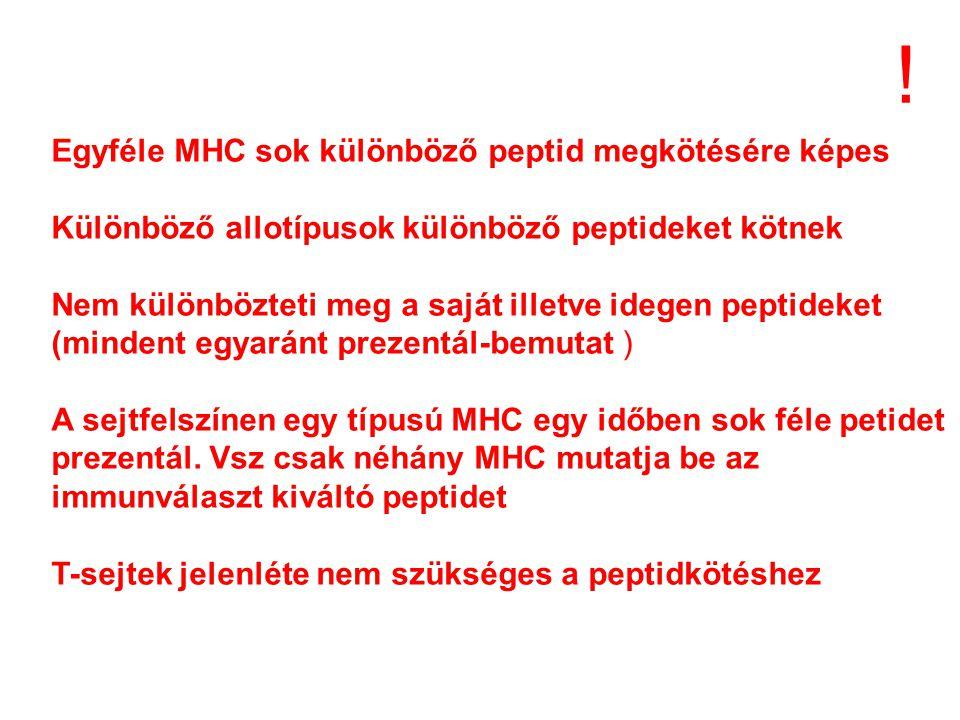 ! Egyféle MHC sok különböző peptid megkötésére képes