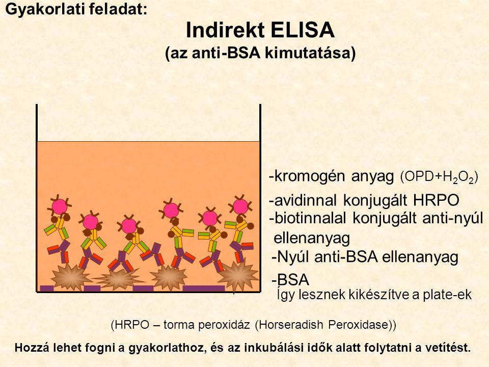 (az anti-BSA kimutatása)