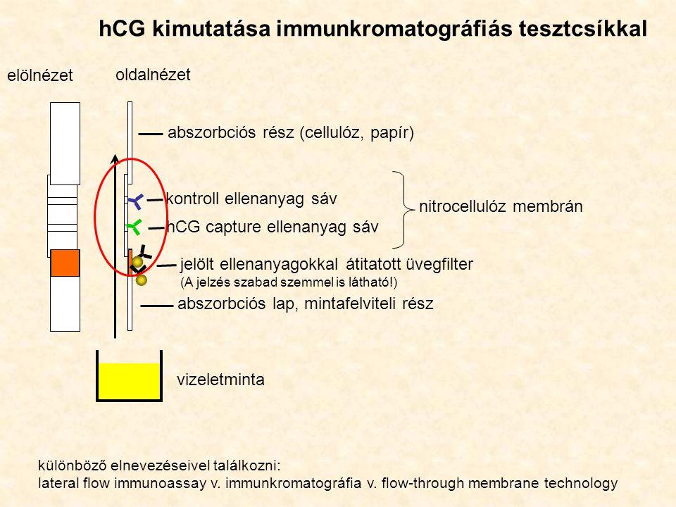 hCG kimutatása immunkromatográfiás tesztcsíkkal