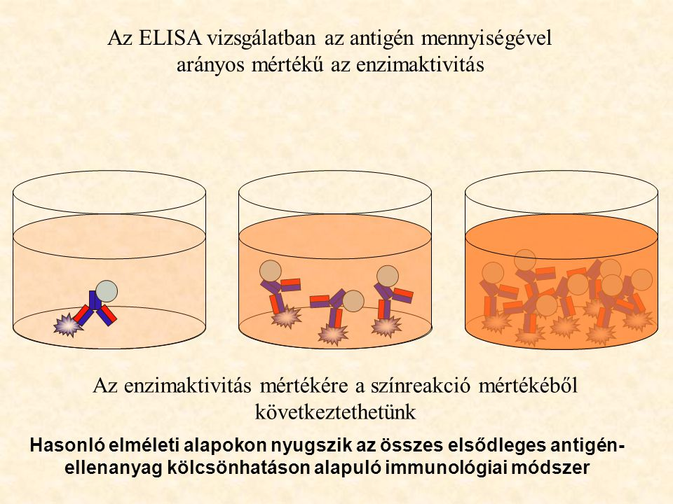Az enzimaktivitás mértékére a színreakció mértékéből következtethetünk