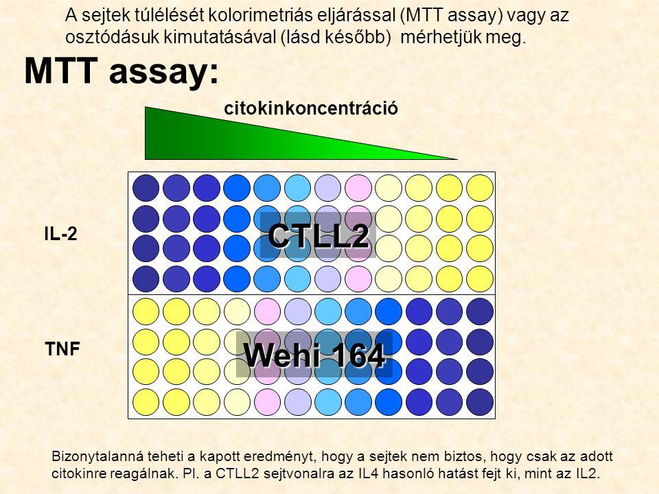 A sejtek túlélését kolorimetriás eljárással (MTT assay) vagy az osztódásuk kimutatásával (lásd később) mérhetjük meg.