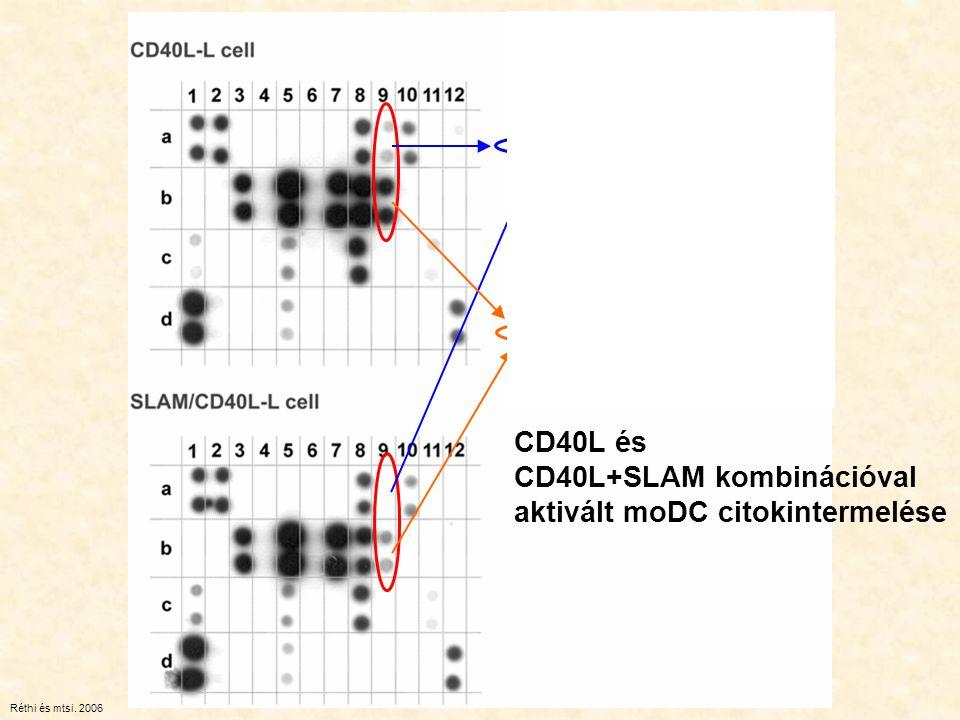 CD40L+SLAM kombinációval aktivált moDC citokintermelése