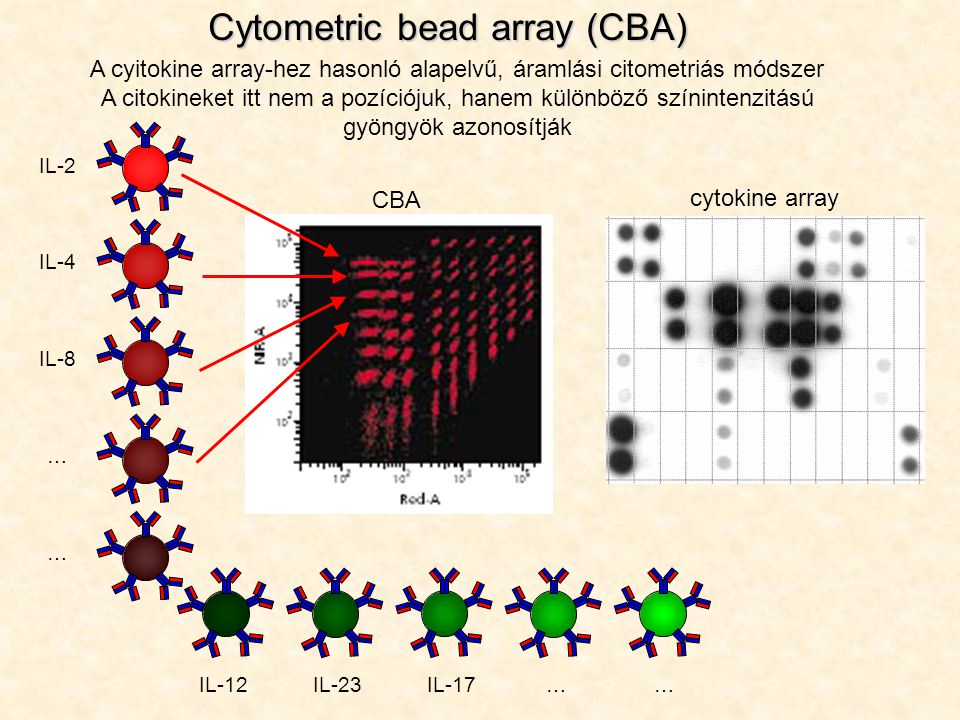 A cyitokine array-hez hasonló alapelvű, áramlási citometriás módszer