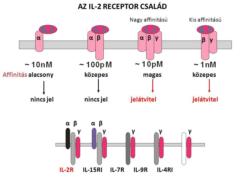 AZ IL-2 RECEPTOR CSALÁD Affinitás alacsony közepes magas közepes