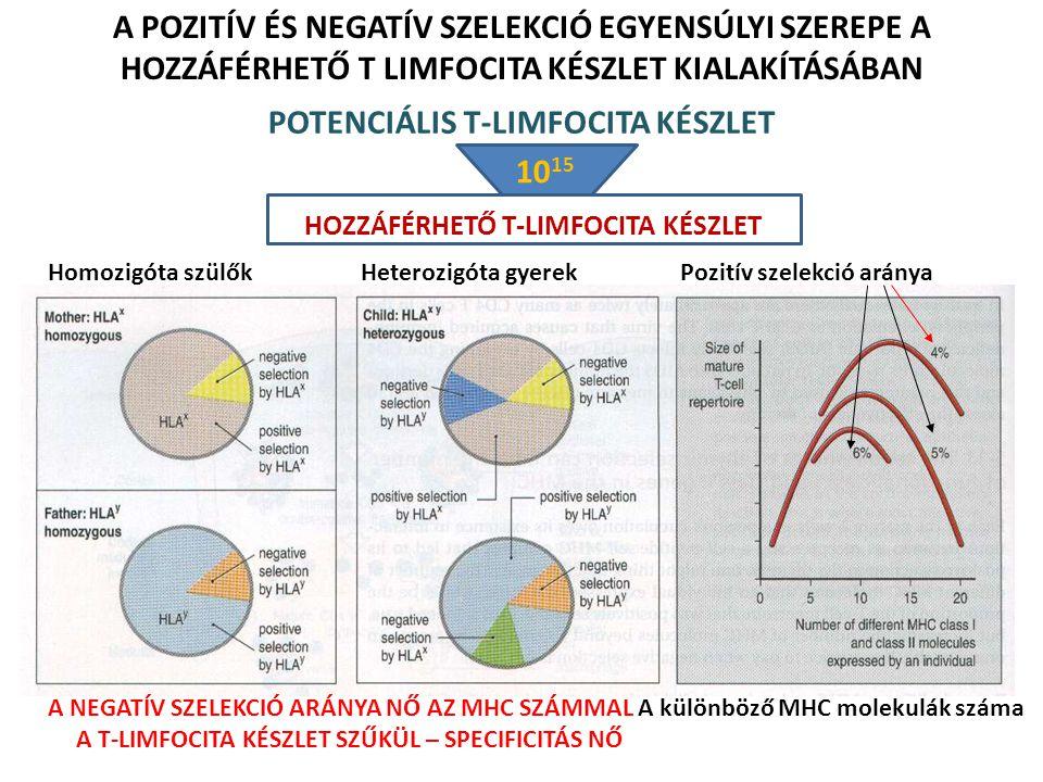 POTENCIÁLIS T-LIMFOCITA KÉSZLET