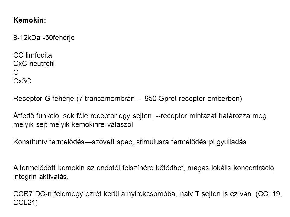 Kemokin: 8-12kDa -50fehérje. CC limfocita. CxC neutrofil. C. Cx3C. Receptor G fehérje (7 transzmembrán--- 950 Gprot receptor emberben)