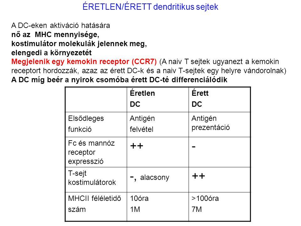 ÉRETLEN/ÉRETT dendritikus sejtek