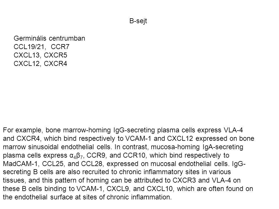 B-sejt Germinális centrumban. CCL19/21, CCR7. CXCL13, CXCR5. CXCL12, CXCR4.