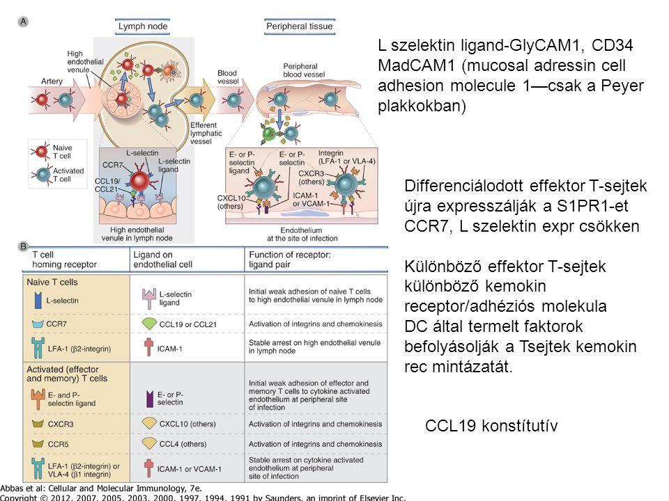 L szelektin ligand-GlyCAM1, CD34