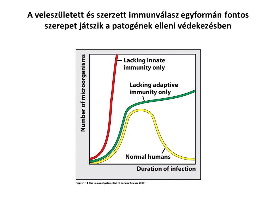 A veleszületett és szerzett immunválasz egyformán fontos szerepet játszik a patogének elleni védekezésben