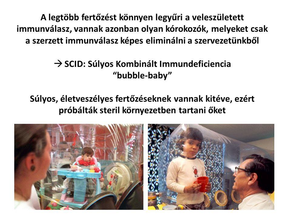 SCID: Súlyos Kombinált Immundeficiencia
