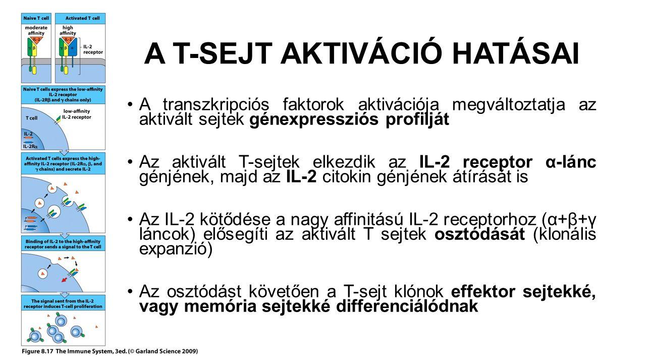 A T-SEJT AKTIVÁCIÓ HATÁSAI