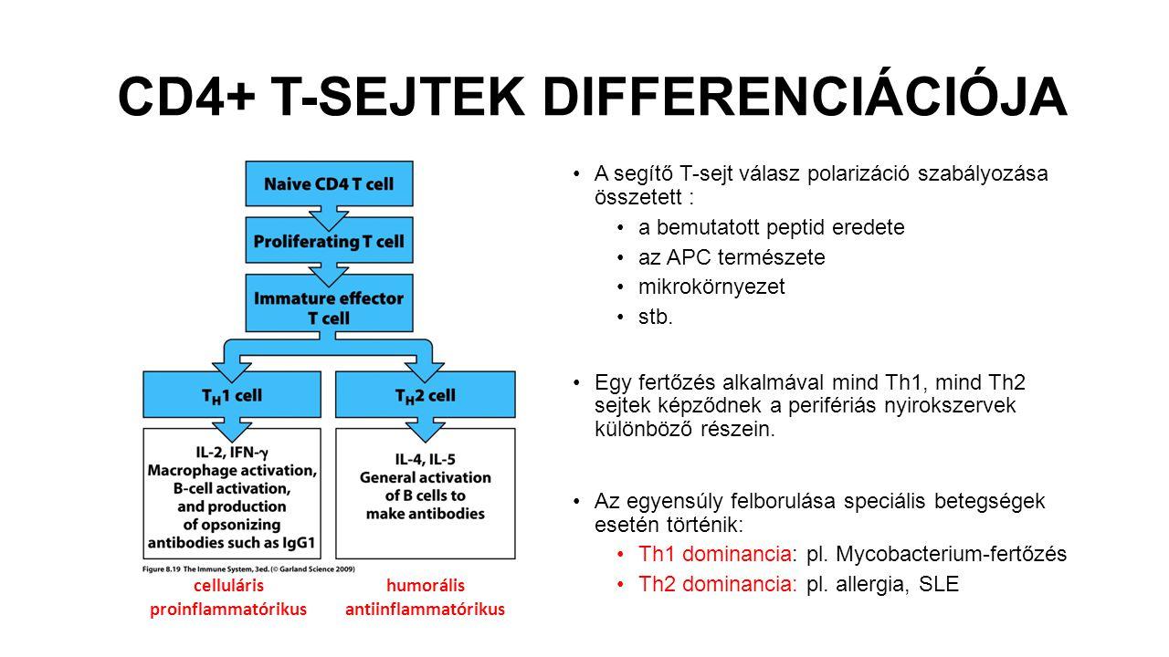 CD4+ T-SEJTEK DIFFERENCIÁCIÓJA