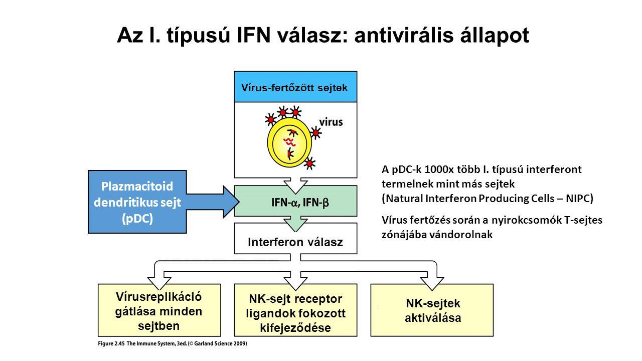 Az I. típusú IFN válasz: antivirális állapot