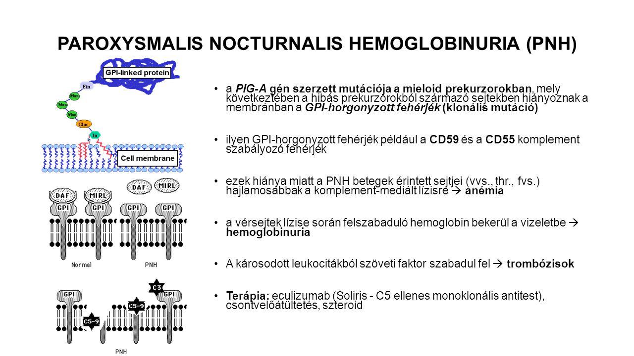 PAROXYSMALIS NOCTURNALIS HEMOGLOBINURIA (PNH)