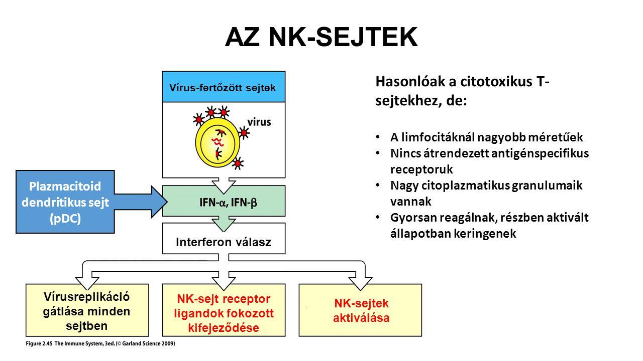AZ NK-SEJTEK Hasonlóak a citotoxikus T-sejtekhez, de: