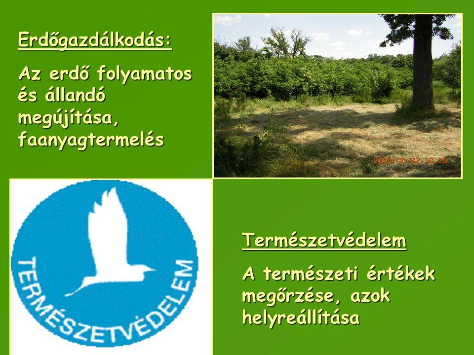Erdőgazdálkodás: Az erdő folyamatos és állandó megújítása, faanyagtermelés.